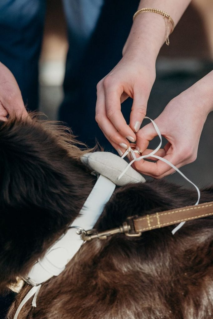 furry friends at ever after henry the ring bearer