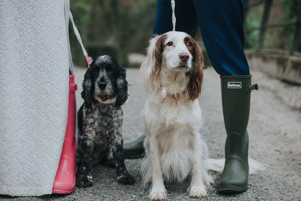 furry friends at ever after spaniels Penny & pickle